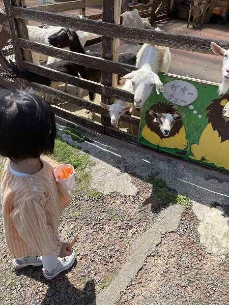 【スザンヌの妹マーガリンの子育てブログ】新学期からの娘の頻尿…愛情たっぷりミルク牧場へ!